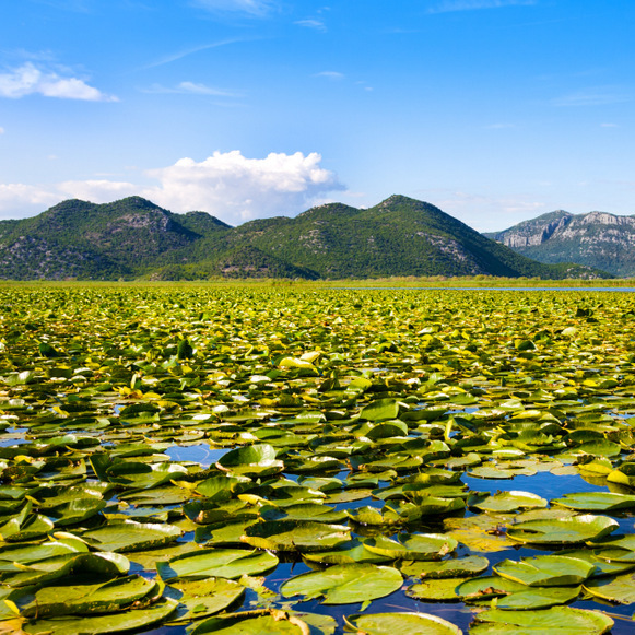 Skadar lake - Montenegro - Albania