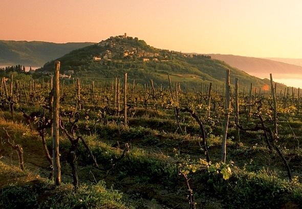 Istria Travel Guide - Motovun