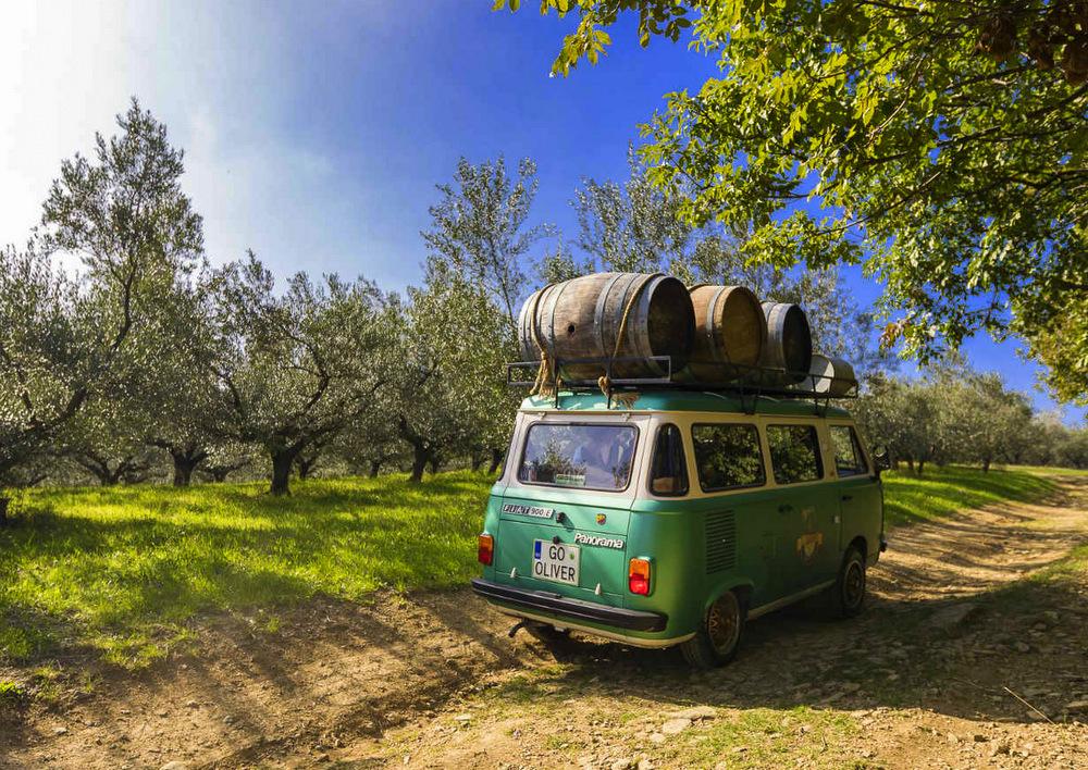 olive grove tour in Slovenia, Istria