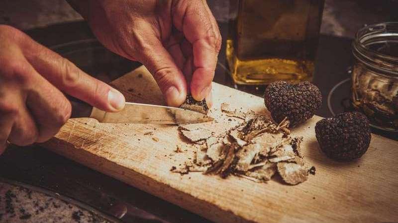 Truffle hunting in Slovenia